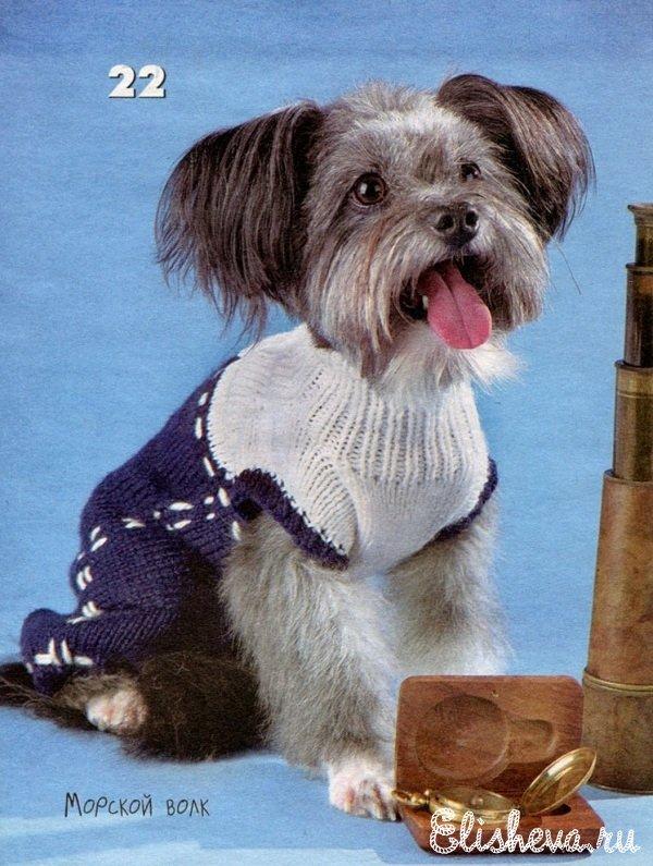Бело-синий комбинезон для собаки вязаный спицами