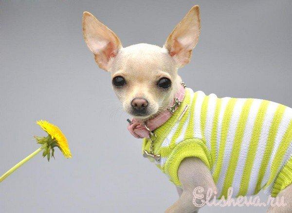 Вязаная одежда для собак,