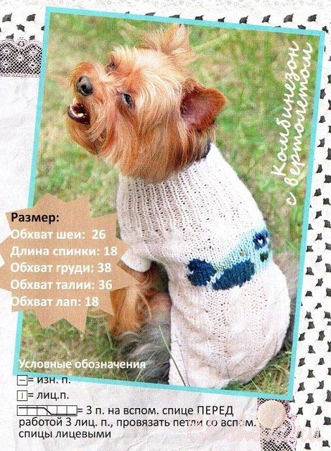 для собаки вязаный спицами